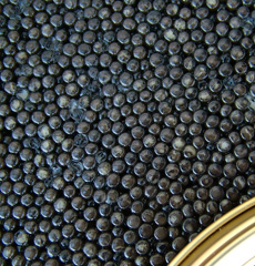 Organic Caviar