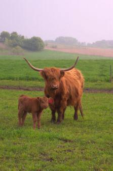 Fountain Prairie Highland Beef