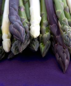 3-colors-dark-bkgd-australianasparagusgrowners-230b