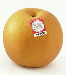 Asian_Pear_PA_sticker-230