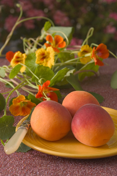 FrogHollow-apricots-230