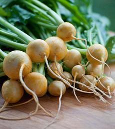 Gold Turnips
