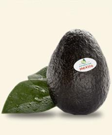 avocado-230