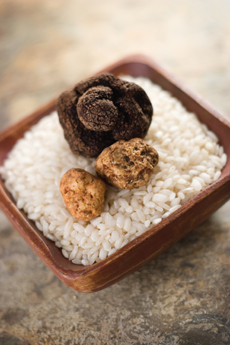 Perigord and Alba Truffles