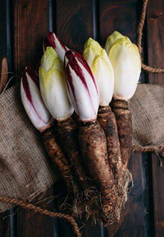 Endive With Root