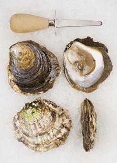 belon_oysters-jpshellfish-230