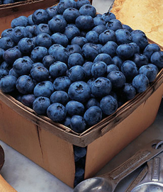 blueberry-carton-burpee-230