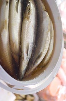 brined-herring-fudder.de-230