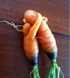 carrots-in-love-doleFB-230s