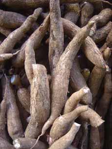 Cassava Root