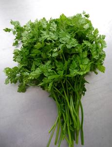 chervil-bunch-www.herbtable.com-230