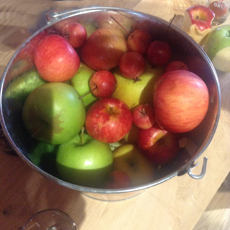 Cider Apples At Angry Orchard