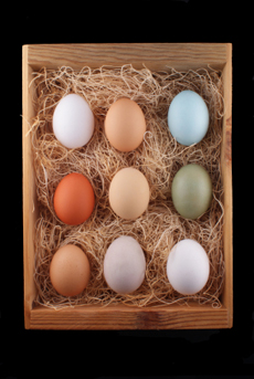 colored-eggs-230