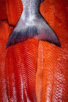 Copper River Salmon Fillets