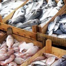 Fresh-Caught Fish