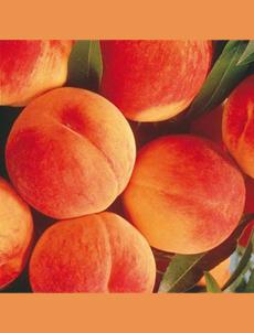elberta-peaches-gurneys-230