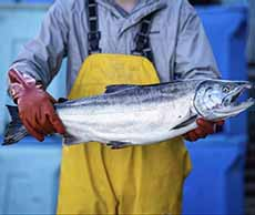 Fisherman With Salmon