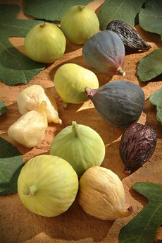 /home/content/71/6181571/html/wp content/uploads/fresh and dry figs californiafigs 230
