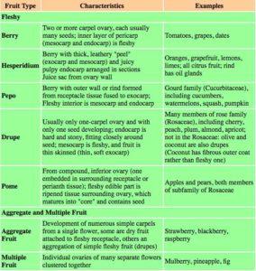 Fruit Categories Chart