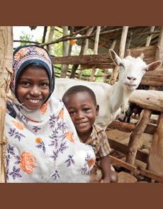 goat-kids-heiferintl-230