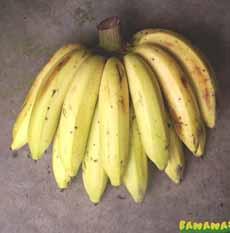 Gros Michel Bananas