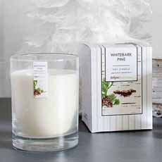 Bright Endeavors Holiday Candle