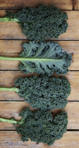 Different Varieties of Kale