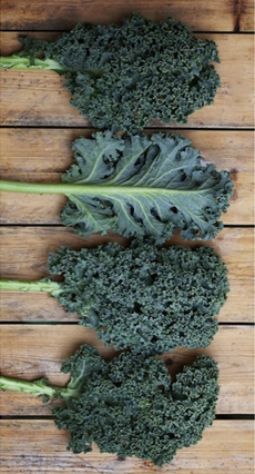 kale-varieties-nationalkaleday.org-230r