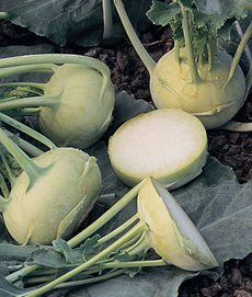 kohlrabi-sweet-vienna-burpee-green-230