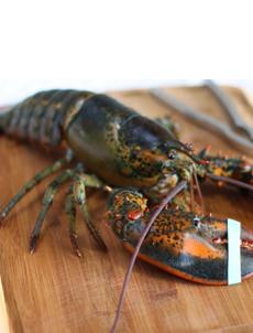 live_lobster_ilovebluesea-230