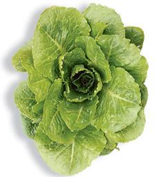 manoa-lettuce-sunset.com-230