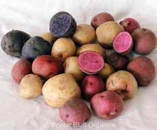 Mixed New Potatoes