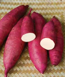 Murasaki Japanese Sweet Potato