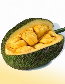 open-jackfruit-showing-bulbs-wisegeek-230b