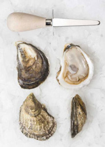 Permaquid Oysters