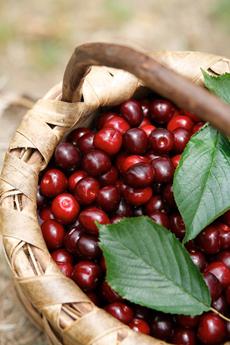 picota-cherries-basket-foodsfromspainFB-230