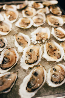 Band Oysters