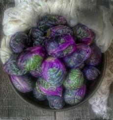 purple-brussels-familyspice-friedasFB-230