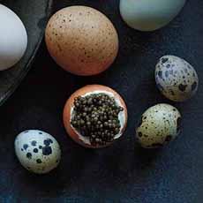 Quail & Chicken Eggs