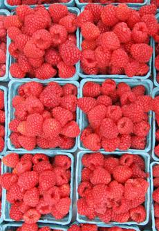 raspberries-cartons-MF-jeltovski-230