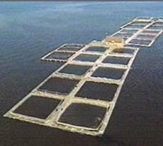 salmon_farm-monterey-aquarium