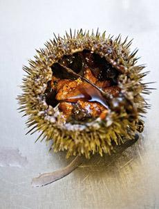 sea-urchins-open-shell-smithsonian-230