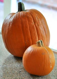 Pumpkin Sizes