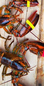 /home/content/71/6181571/html/wp content/uploads/trio lobsterfrommaineFB 230r