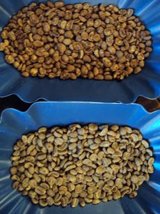 Sumatra Coffee Beans