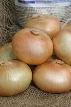 vidalia-onions-vidaliaonions.com-230
