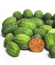 watermelon-cucumbers-melissas-230a