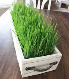 Wheatgrass Planter