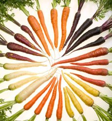 wheel-of-colored-carrots-localharvestorg-230