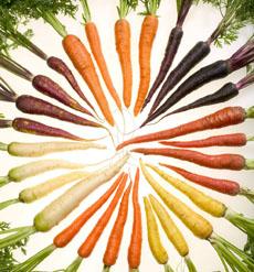 wheel-of-colored-carrots-localharvestorg-230